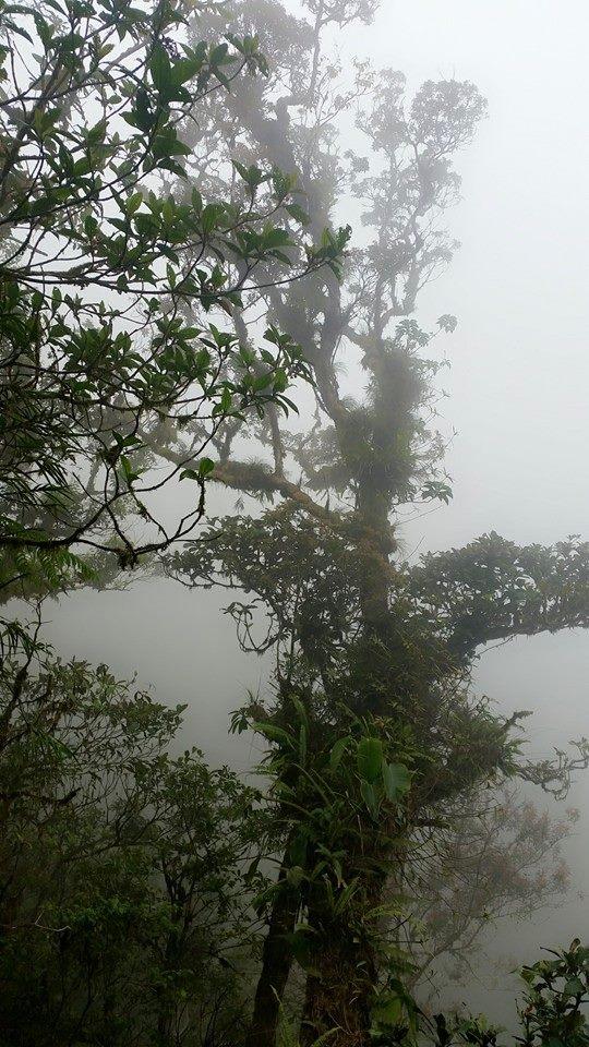Amidst The Enchanted Mount Makiling – yenadventuretolife